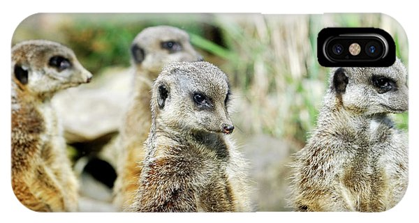 Meerkat iPhone Case - Meerkats by Heiti Paves