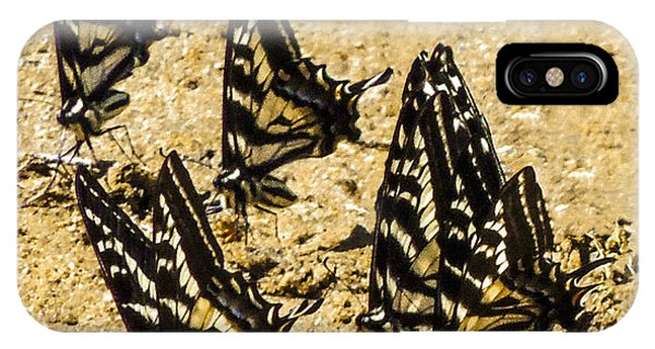 Merced Swallowtails IPhone Case
