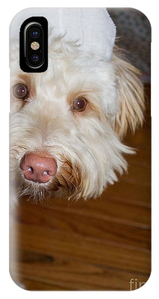 Merry Christmas From A Labradoodle IPhone Case