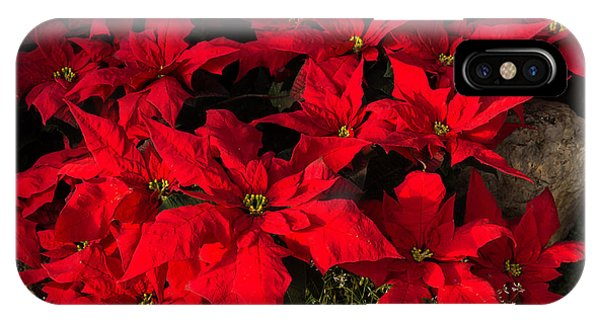 Merry Scarlet Poinsettias Christmas Star IPhone Case