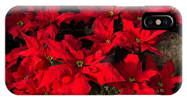 Merry Scarlet Poinsettias Christmas Star IPhone Case