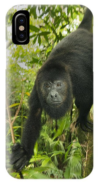 Mexican Black Howler Monkey Belize IPhone Case