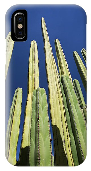 Adapted iPhone Case - Mexican Fence Post Cacti by Jim West