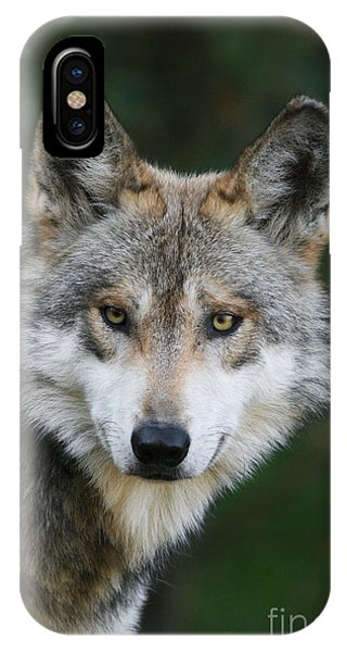 Mexican Wolf #3 IPhone Case