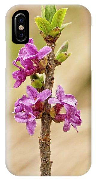 Mezereon (daphne Mezereum) In Flower Phone Case by Bob Gibbons