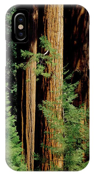 Kings Canyon iPhone Case - Mid Section Of Giant Sequoia Trees by Greg Probst