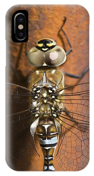 Migrant Hawker Dragonfly Closeup IPhone Case