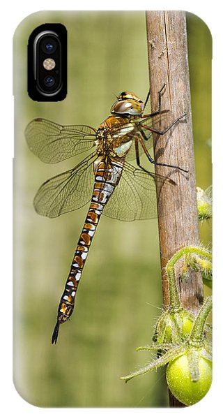 Migrant Hawker Dragonfly IPhone Case