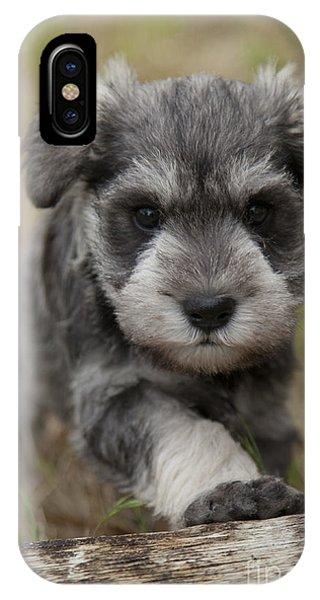 Mini Schnauzer Puppy IPhone Case