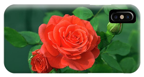 Miniature Rose (rosa 'patiohit') Phone Case by Brian Gadsby/science Photo Library