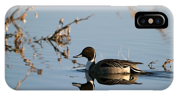 Northern Pintail Mirror Image IPhone Case
