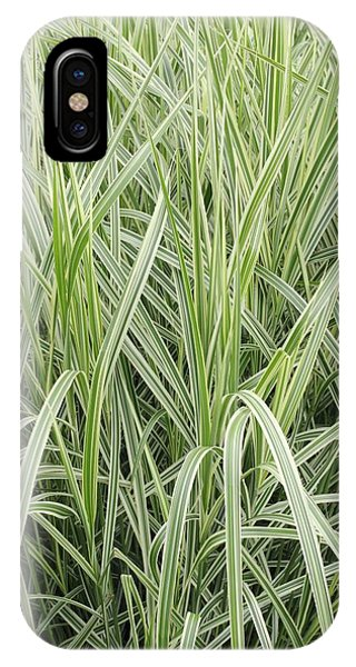 Deciduous iPhone Case - Miscanthus Sinensis 'variegatus' by Geoff Kidd/science Photo Library