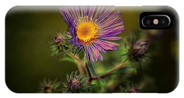 Miss Aster IPhone Case