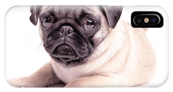 Pug iPhone Case - Miss You by Edward Fielding