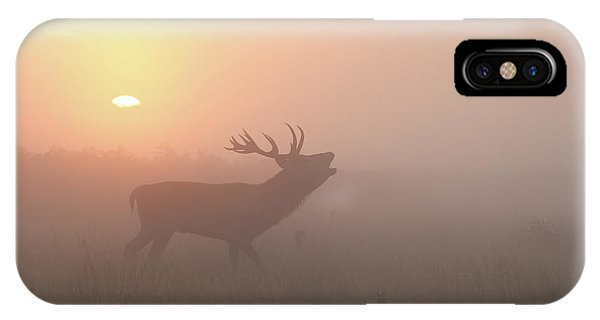 Stag iPhone Case - Misty Morning Stag by Greg Morgan