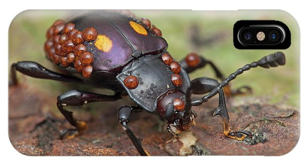 Mites On Fungus Beetle Phone Case by Melvyn Yeo/science Photo Library
