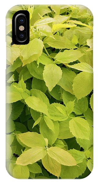 Deciduous iPhone Case - Mock Orange Foliage. by Geoff Kidd/science Photo Library