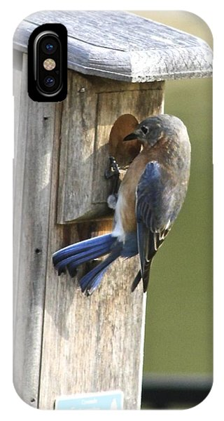 Mom Bluebird Investigates IPhone Case
