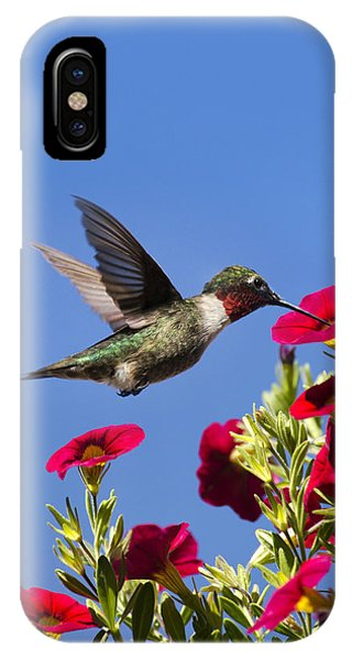 Humming Bird iPhone Case - Moments Of Joy by Christina Rollo