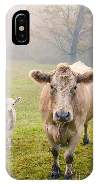Farm Landscape iPhone Case - Momma And Baby Cow by Edward Fielding