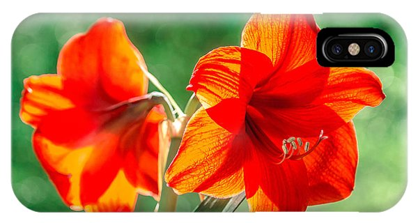 Moms Amaryllis Flower IPhone Case