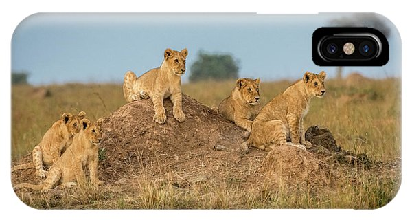 Lions iPhone Case - Mom's Coming Back - Dinner Is Almost Here. by Jeffrey C. Sink