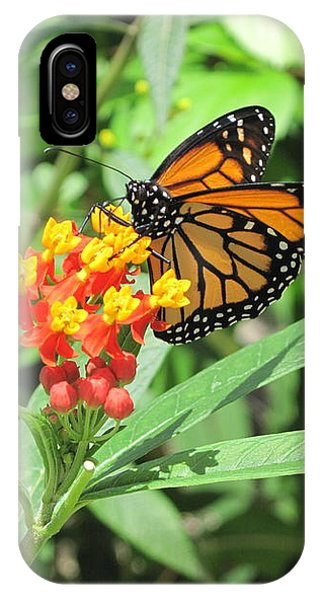 Monarch At Rest IPhone Case