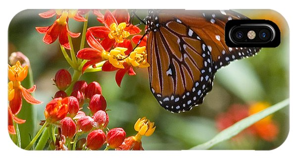 IPhone Case featuring the photograph Monarch  At Work  by Mae Wertz