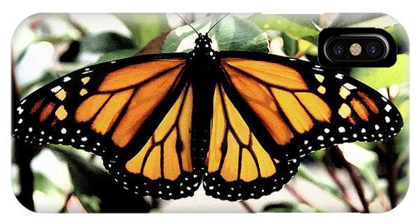 Monarch Beauty IPhone Case
