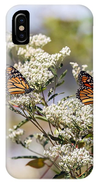 Monarch Butterflies On Milkweed IPhone Case