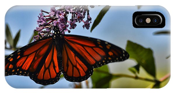 Monarch Butterfly #1 IPhone Case