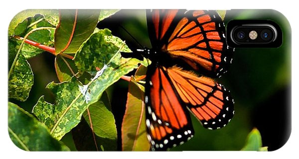 Viceroy Butterfly II IPhone Case