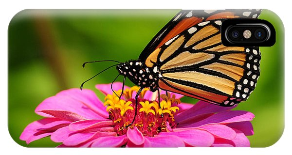 Monarch Butterfly On Zinnia IPhone Case