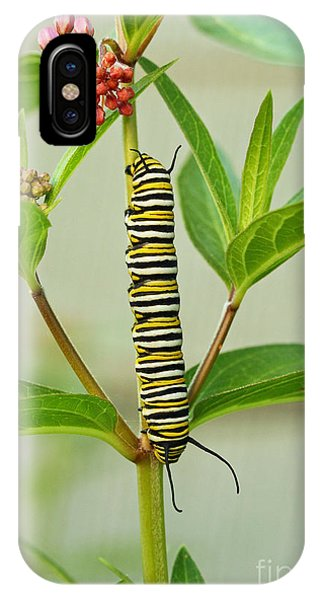 Monarch Caterpillar And Milkweed IPhone Case