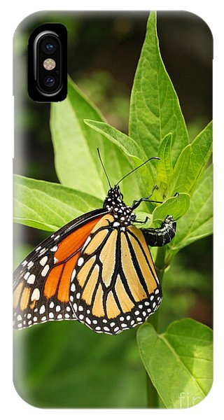Monarch Egg Time IPhone Case