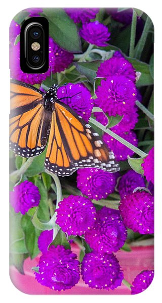 Monarch On Bachelor Buttons IPhone Case