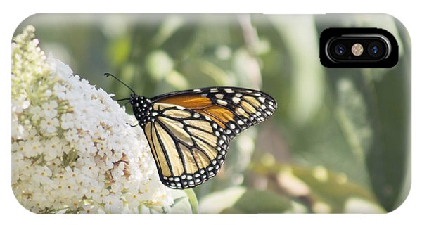 Monarch On Buddleia IPhone Case