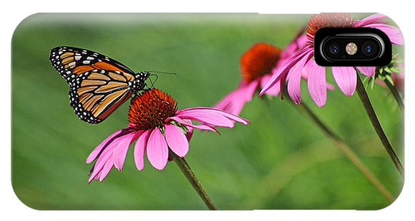 Monarch On Garden Coneflowers IPhone Case