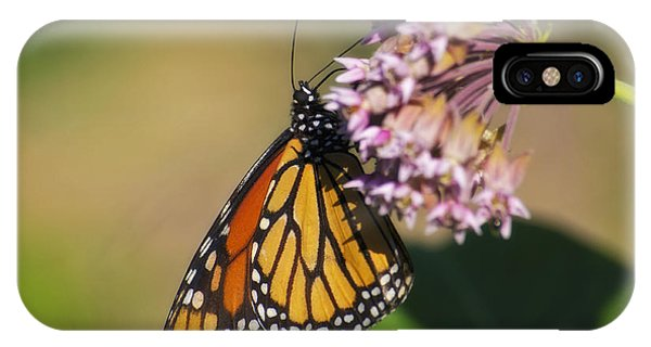 Monarch On Milkweed IPhone Case