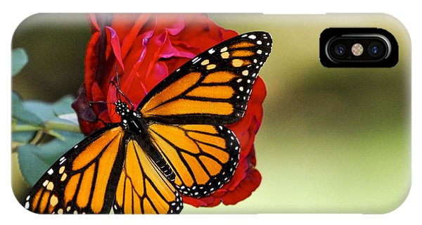 Monarch On Rose IPhone Case