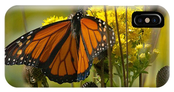 Monarch On Stiff Goldenrod IPhone Case