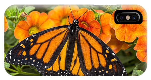 Monarch Resting IPhone Case