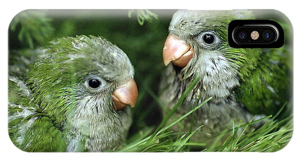 Monk Parakeet Chicks IPhone Case