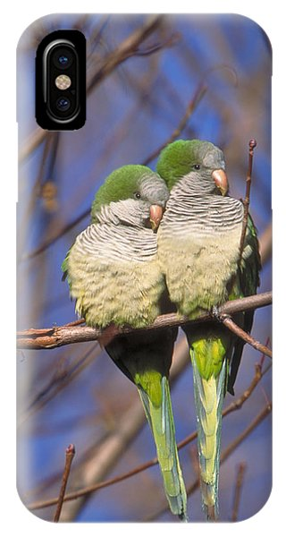 Monk Parakeets IPhone Case