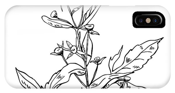White Background iPhone Case - Monochrome Image Beggarticks Herb by Irinia