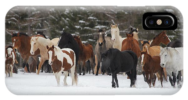 Montana Herd IPhone Case