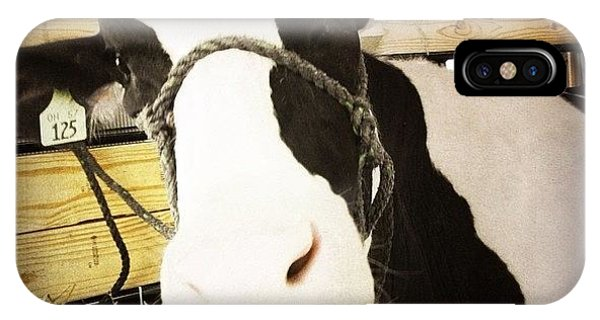 Ohio iPhone Case - Moo Cow by Natasha Marco