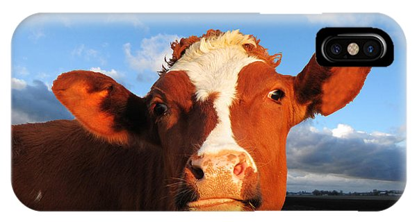 Moo Don't Say Cow IPhone Case