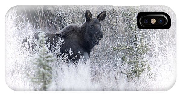 Moose Calf IPhone Case