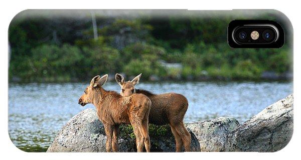 Moose Calves In Maine IPhone Case